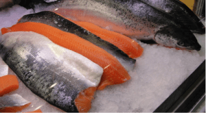 cold water salmon